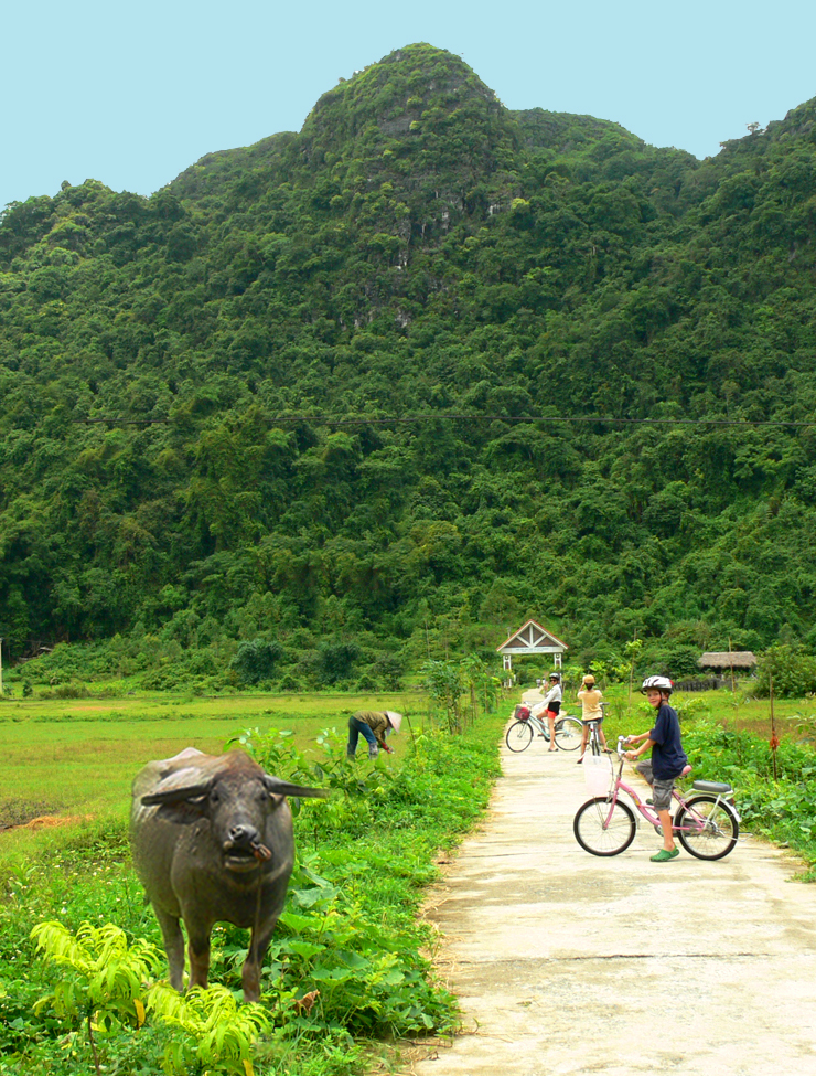 Seamus riding bike through rice paddies on family trip to Halong Bay, Vietnam