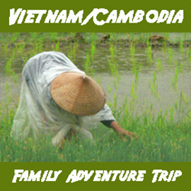 Rice paddy Vietnam